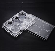 6 well Cell Culture Plate-31006