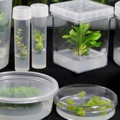 Buy Online Plant Tissue Culture Essentials, India | Biomall in